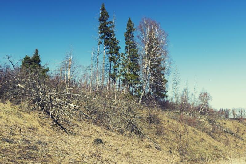 La foresta di morte, alberi morti si trova fotografia stock libera da diritti