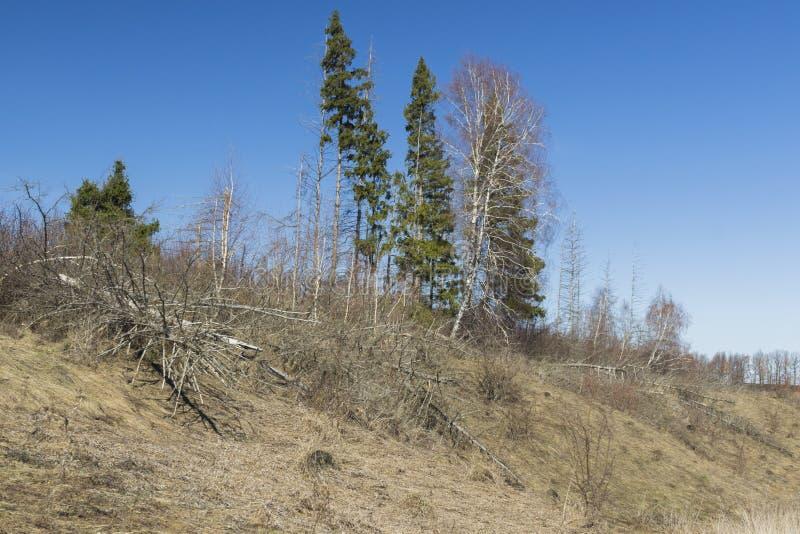 La foresta di morte, alberi morti si trova immagini stock libere da diritti