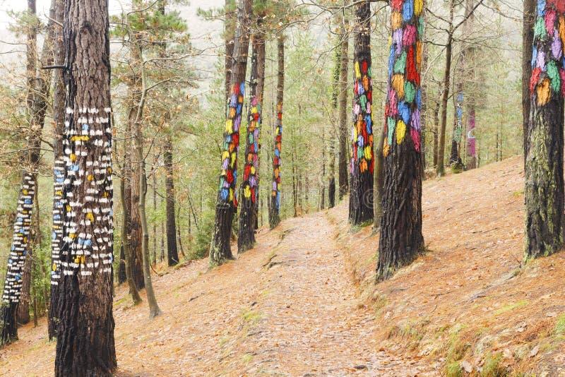 La foresta di Oma, riserva di biosfera di Urdaibai immagini stock libere da diritti