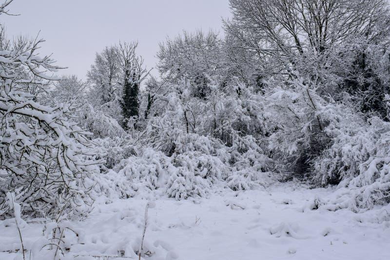 La foresta di Snowy in campagna francese durante il Natale condisce/inverno immagini stock libere da diritti