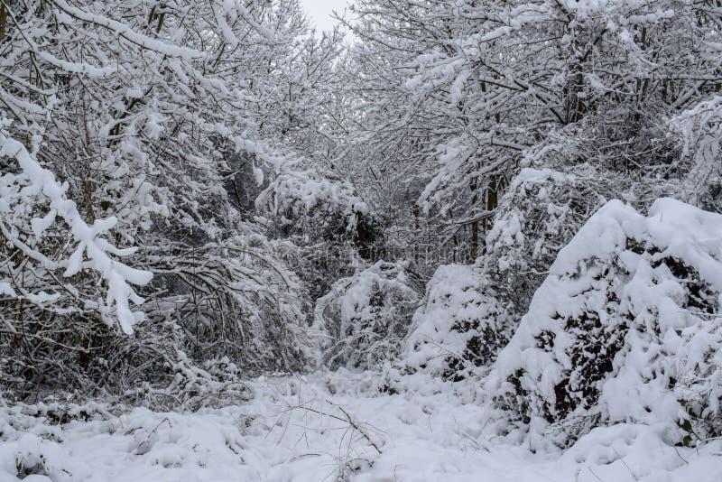 La foresta di Snowy in campagna francese durante il Natale condisce/inverno fotografia stock libera da diritti