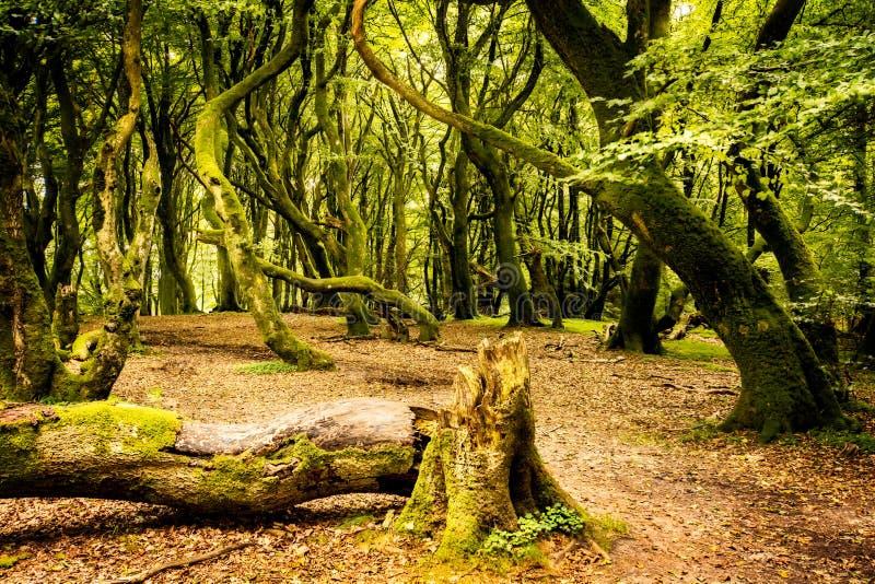 La foresta di Troll fotografia stock libera da diritti