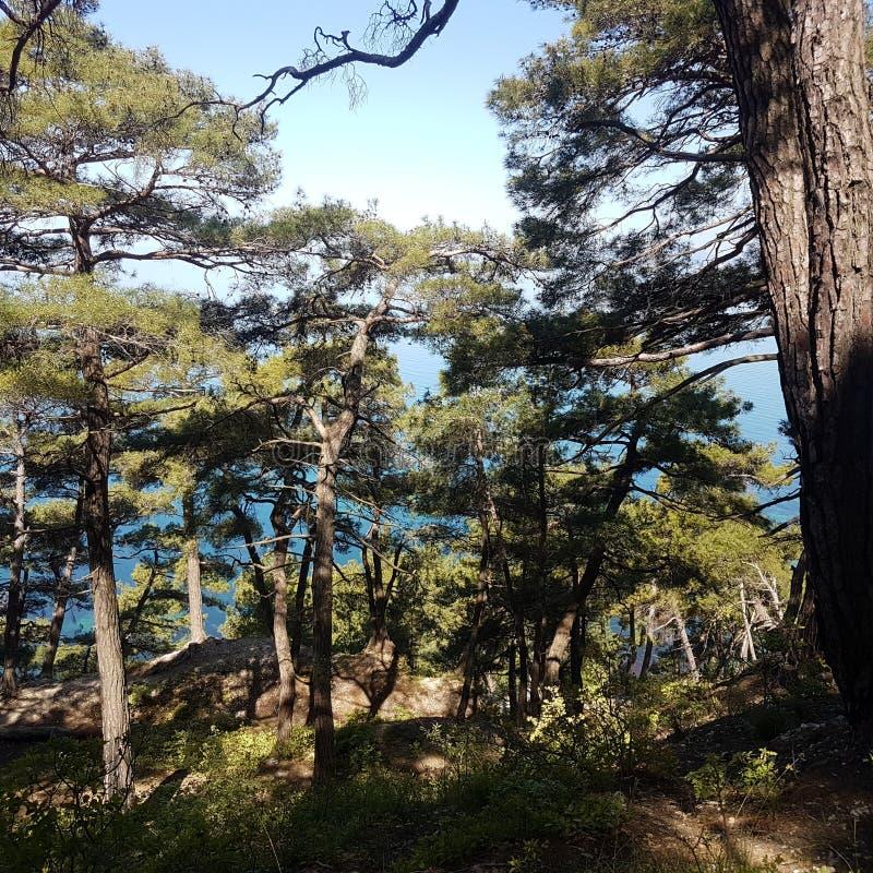 La foresta ed il mare fotografie stock libere da diritti