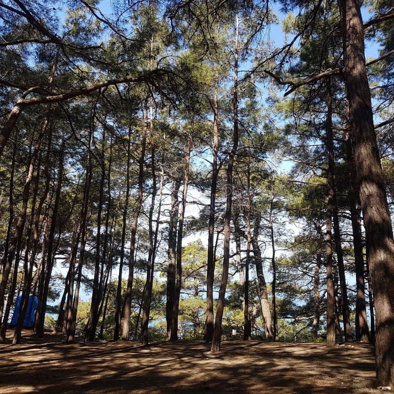 La foresta ed il mare fotografia stock