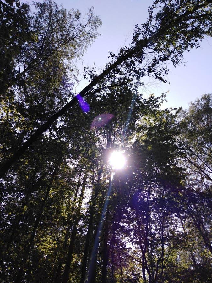 La foresta ed il sole fotografie stock