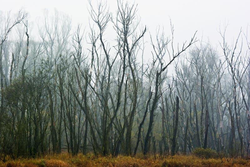 La foresta guasto fotografie stock libere da diritti