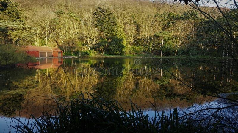 La foresta ha riflesso in lago fotografia stock