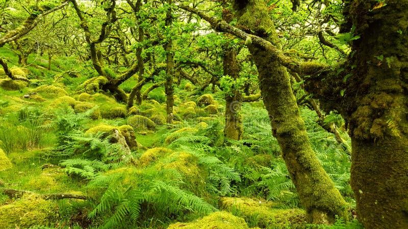 La foresta incantata fotografia stock