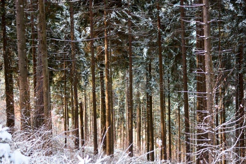 La foresta innevata dell'ancora ritiene l'arrivo della molla e della luce del sole fotografie stock