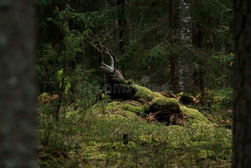 La foresta magica fotografia stock libera da diritti