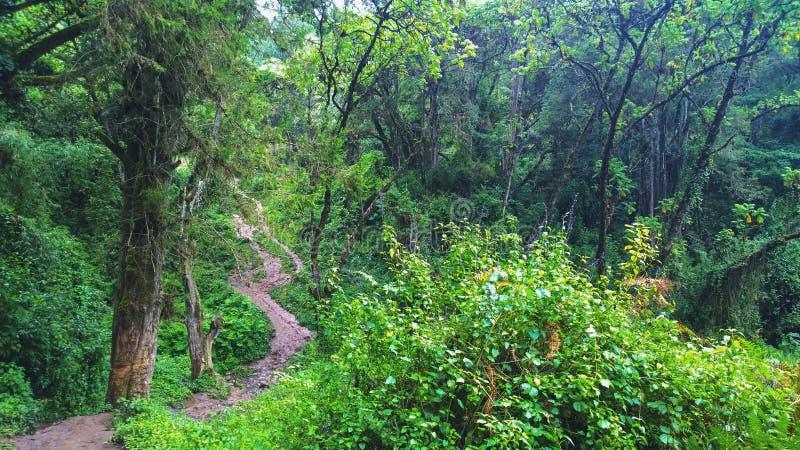 La foresta pluviale densa nelle gamme di Aberdare, Kenya immagini stock