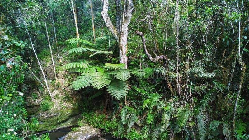 La foresta pluviale densa nelle gamme di Aberdare, Kenya immagine stock libera da diritti