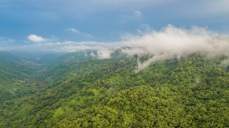 La foresta pluviale tropicale di vista aerea, nebbia ha coperto le montagne nel tropico immagini stock
