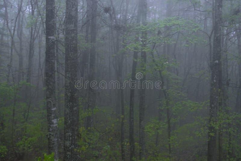 La foresta segreta fotografie stock