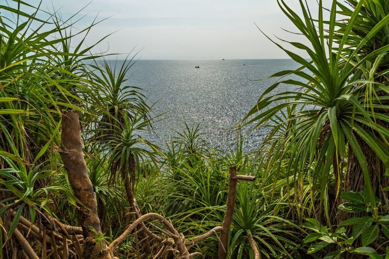 La foresta verde della mangrovia lascia le radici fotografie stock