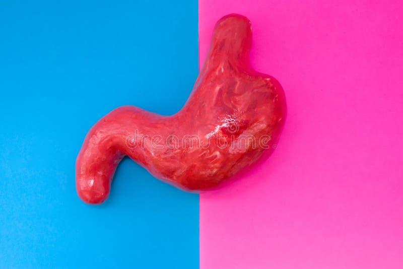 La forma anatómica del estómago está situada en el centro del bastidor, dividido por mitad por el fondo rosado y azul Concepto de imagenes de archivo