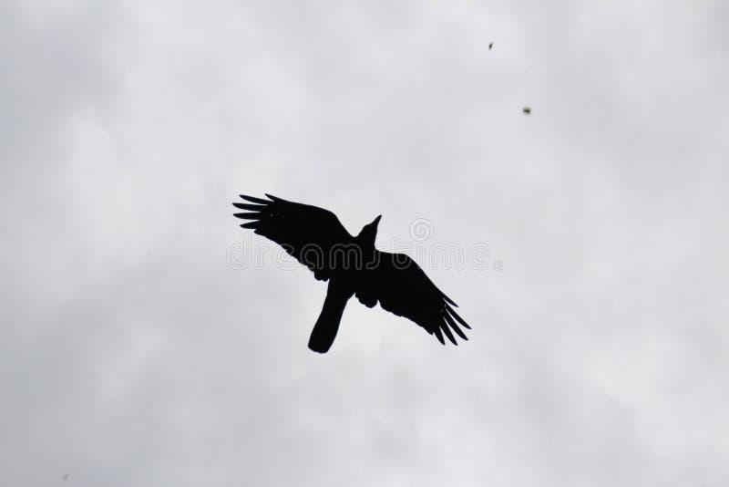 La forma negra del pájaro foto de archivo libre de regalías