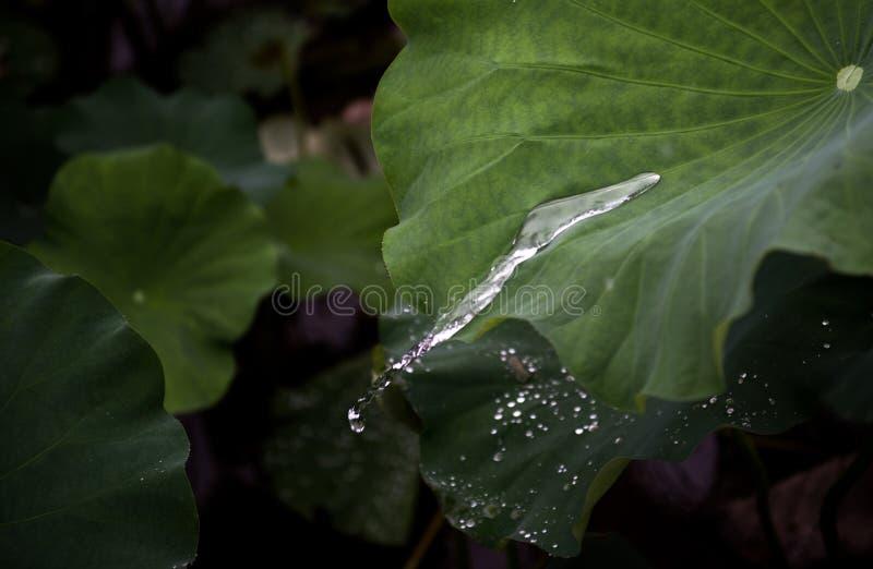 La forme de courant de l'eau image libre de droits