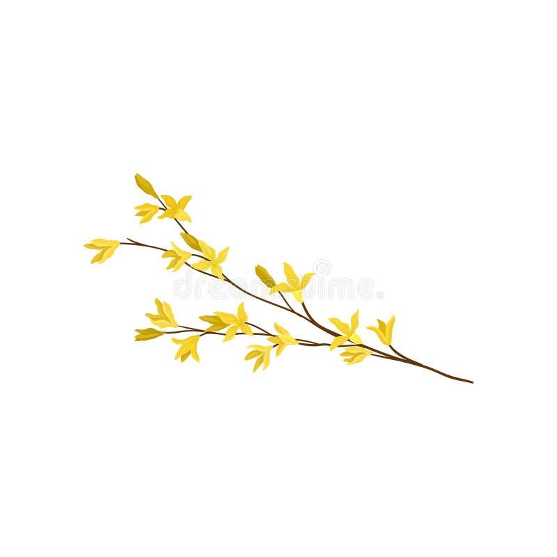 La forsythia ramifica con las pequeñas flores amarillas Planta floreciente Estación de resorte Tema de la naturaleza Icono plano  stock de ilustración