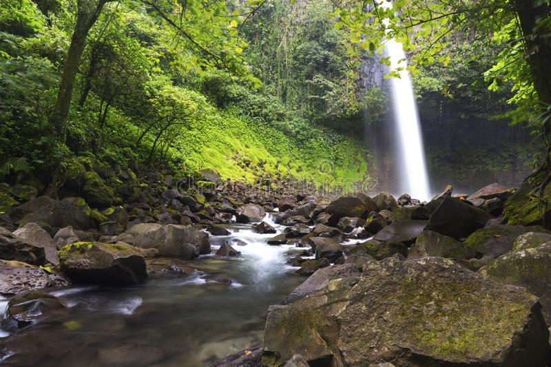 La Fortuna Waterfall Tropical Rainforest Lush Foliage Arenal National Park Costa Rica royalty free stock image