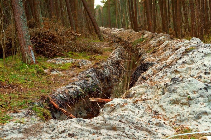 La fossa nell'abetaia, la scanalatura per la stenditura del cavo nella foresta, la distruzione dell'ambiente fotografia stock libera da diritti