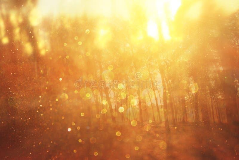 La foto abstracta borrosa de la explosión de la luz entre árboles y bokeh del brillo se enciende imagenes de archivo