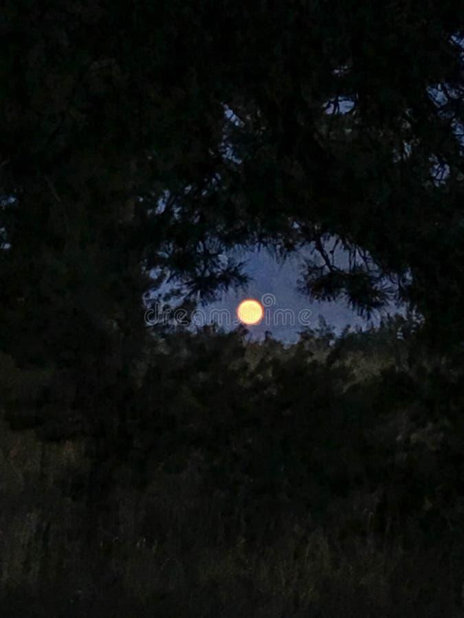 La foto de la Luna Llena en el cielo azul Forest Scenery fotografía de archivo libre de regalías