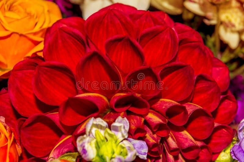 La foto del fondo de la flor del extracto del primer consiste en muchas flores imágenes de archivo libres de regalías