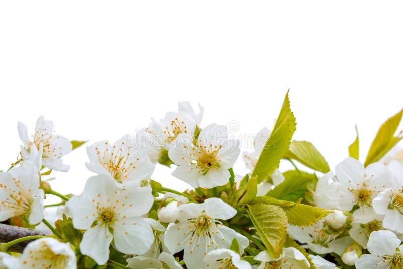 La foto del manzano floreciente ramifica contra el cielo imagen de archivo