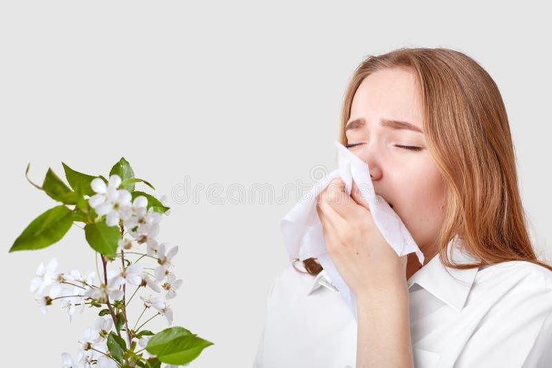 La foto della giovane donna tiene il fazzoletto vicino al naso, ha allergia al fiore dell'albero, porta la camicia elegante, isol immagini stock