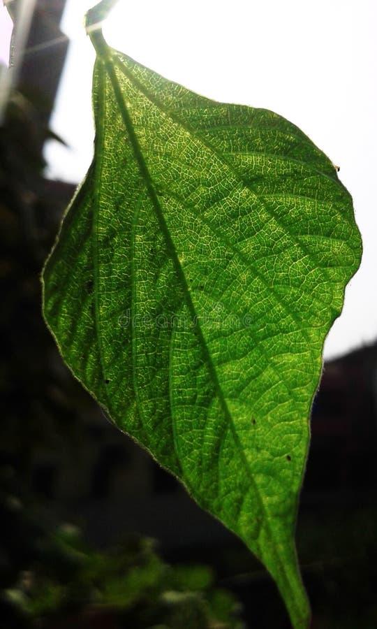 La foto della natura ed i tipi differenti fotografie gradiscono unico fotografia stock libera da diritti