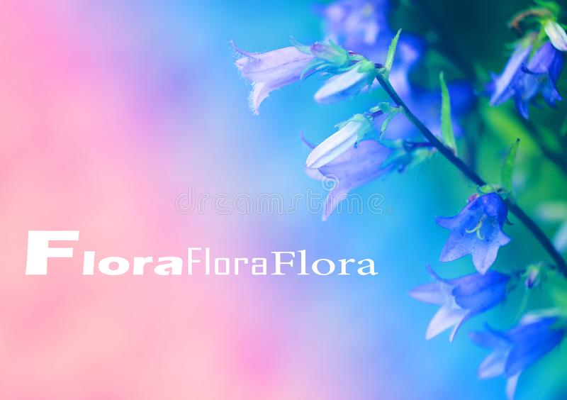 La foto hermosa de las campanas púrpuras de las flores fotografió el primer fotografía de archivo