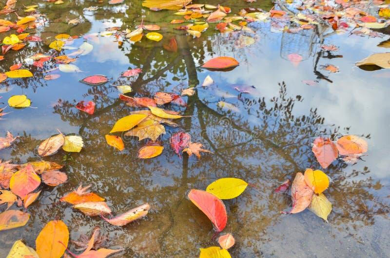 La foto hermosa del amarillo de oro del otoño se va en la reflexión de la superficie del agua fotografía de archivo
