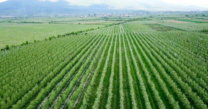 la fotografía del abejón, vista aérea de huertas adentro resen, prespa, Macedonia foto de archivo