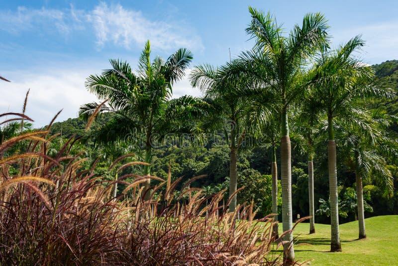La fotografia della natura, campo da golf e si rilassa a Caracas, Venezuela fotografia stock
