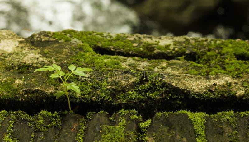 La fougère en nature prospère de l'humidité photos stock