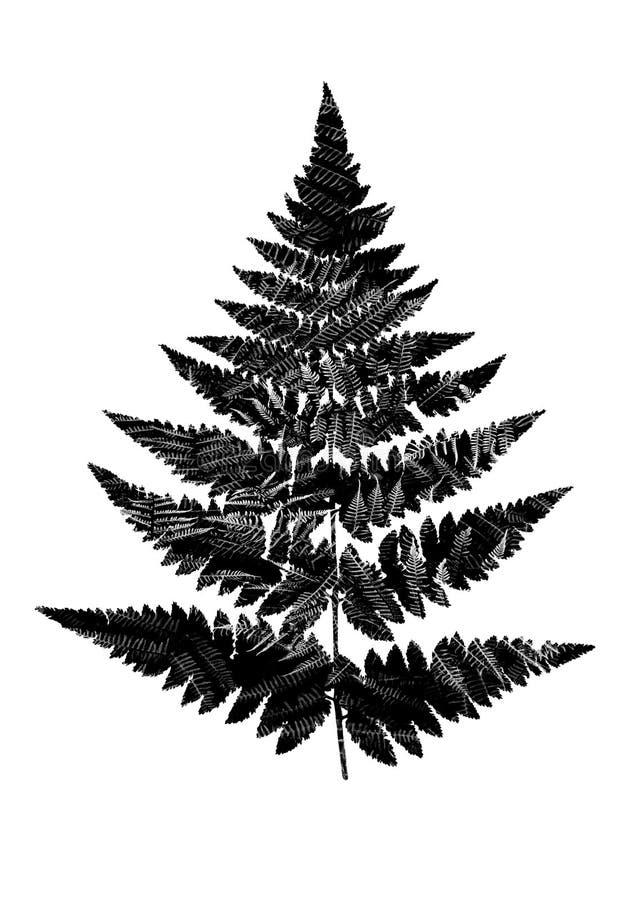 La fougère noire et blanche part dans la silhouette d'une feuille de fougère Faites image stock