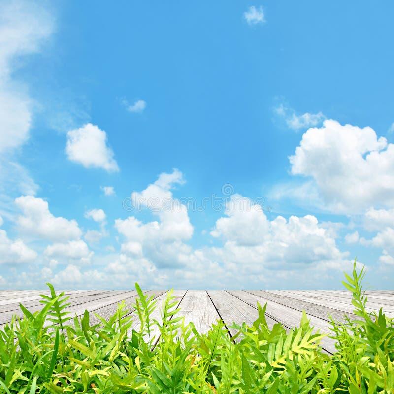 La fougère verte part avec du bois plan0 sur le fond de ciel bleu photos stock