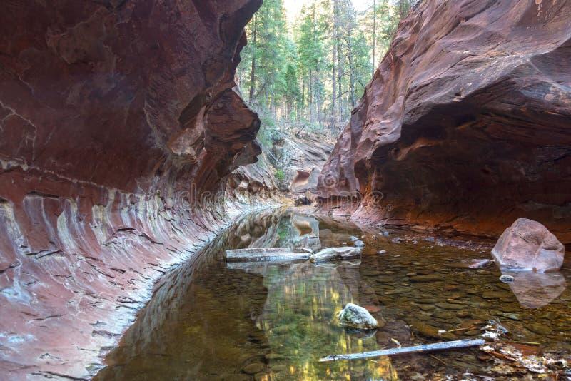 La fourchette occidentale du canyon de Creen de chêne en rouge bascule le parc d'état Sedona Arizona photos libres de droits