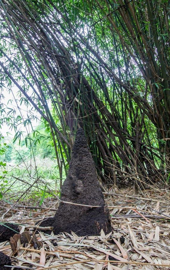 La fourmilière et les bambous chez Waeruwan font du jardinage en parc de PhutthamonthonBuddhist dans le secteur de Phutthamonthon photographie stock libre de droits