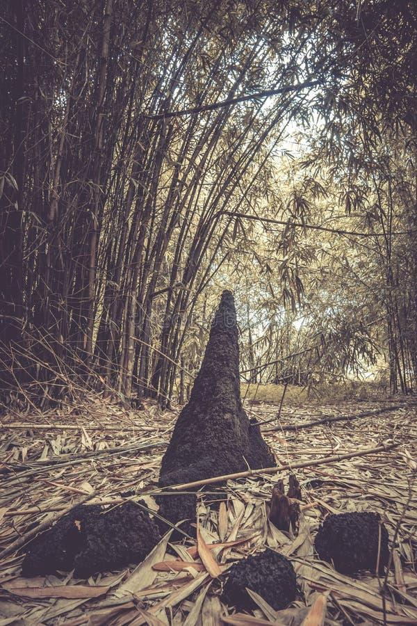 La fourmilière et les bambous chez Waeruwan font du jardinage en parc de PhutthamonthonBuddhist dans le secteur de Phutthamonthon images libres de droits