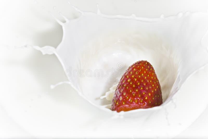 La fragola che cade in latte fotografia stock