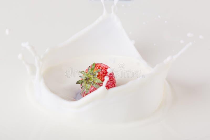 La fragola rossa che cade in latte sul piatto bianco con spruzza fotografia stock