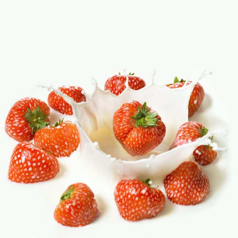 La fraise rouge porte des fruits tombant dans le lait photographie stock