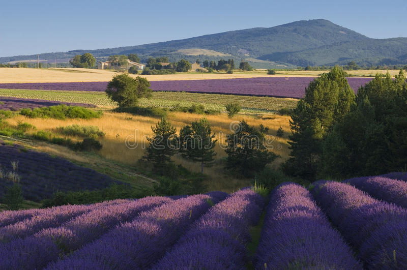 La France - la Provence - le Sault images stock