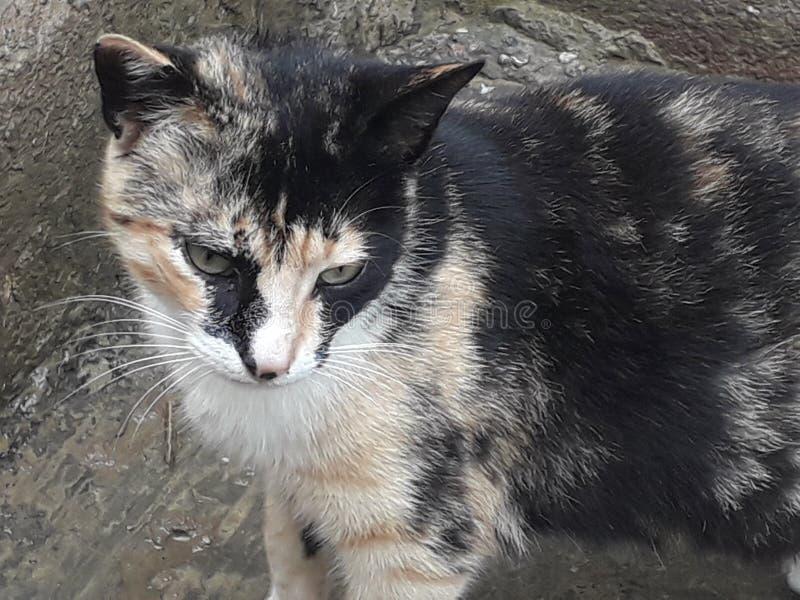 La freschezza di giovane gatto fotografie stock libere da diritti