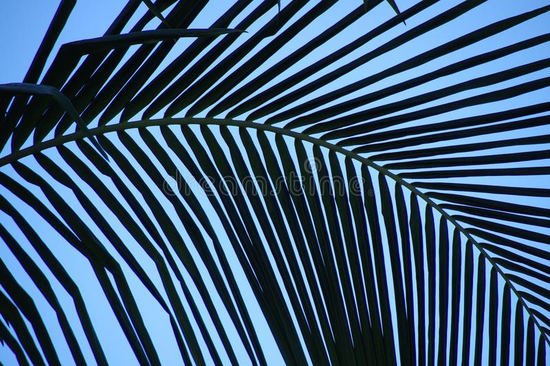 La fronde incurvée de paume crée le modèle abstrait contre un ciel bleu images libres de droits