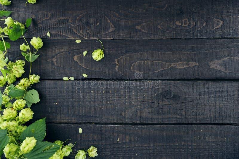 La frontière de l'houblon vert s'embranche sur le fond en bois rustique foncé photos libres de droits