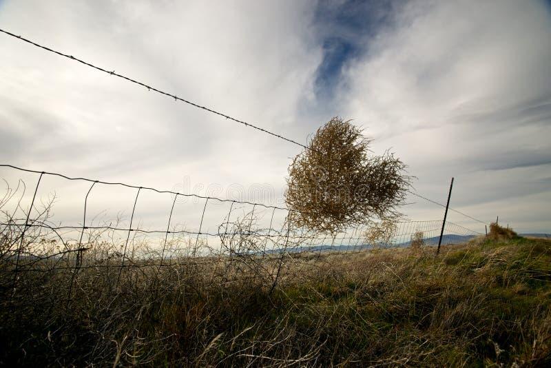 La frontière de sécurité de Tumbleweed photographie stock