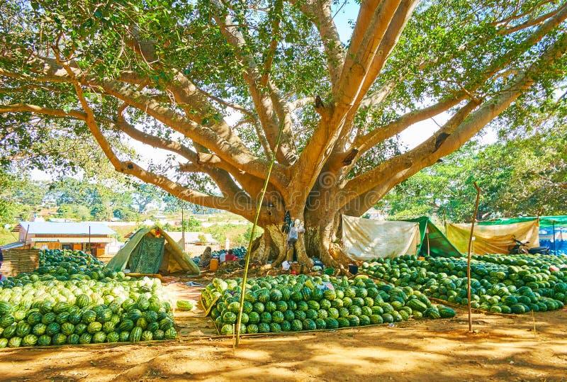 La fruta atasca debajo del banyan viejo, Pindaya, Myanmar fotografía de archivo